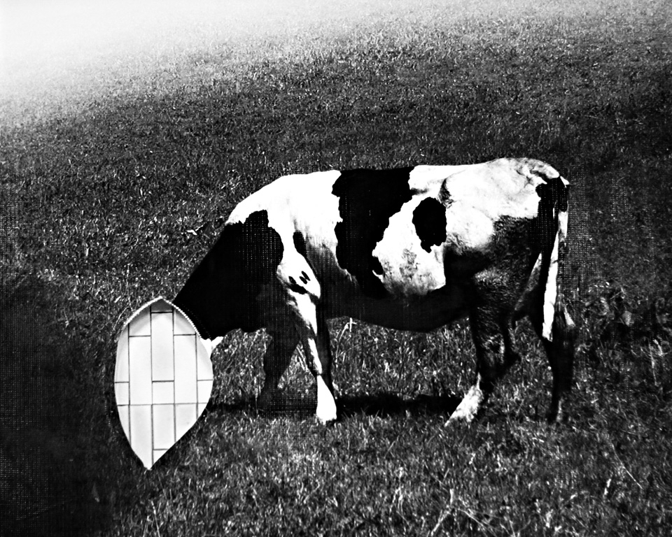 cow_without_head_mohamed_ezz-1